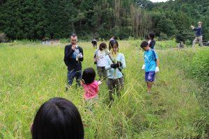 子どもたち中心に稲刈りは実施